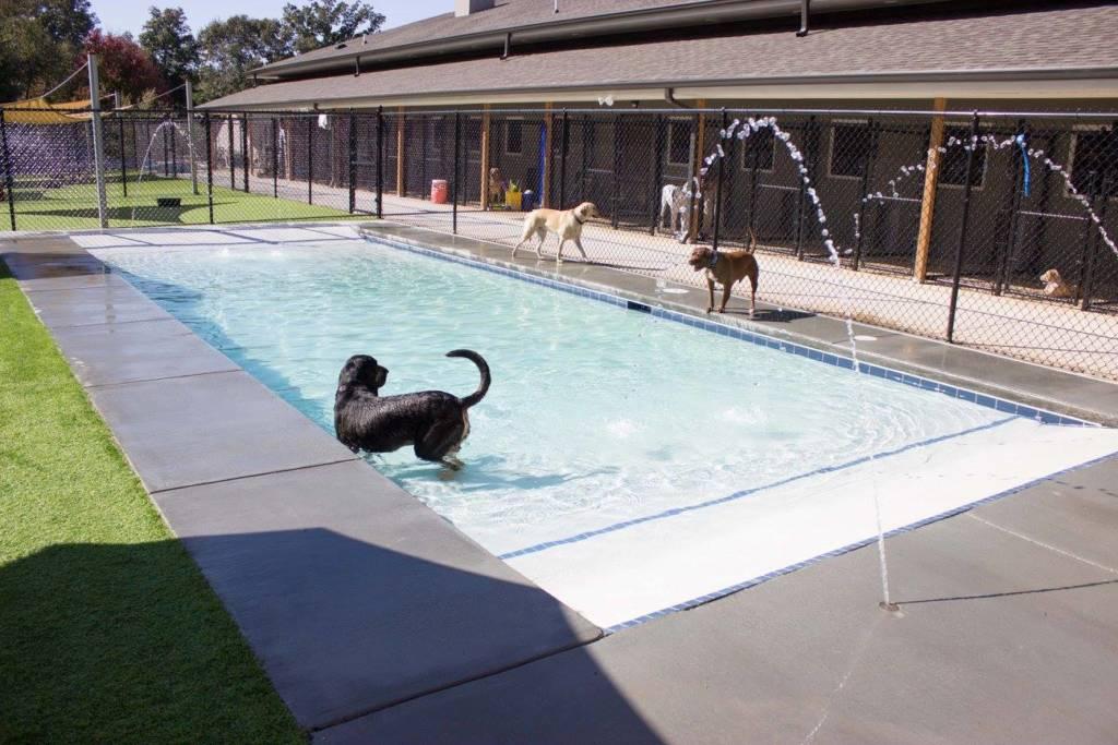 Swimming Pool Water Treadmill