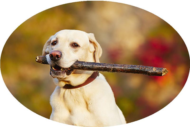 dog_playing