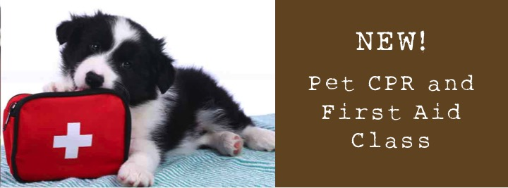 New Pet Cpr And First Aid Certification Class Stoney Creek